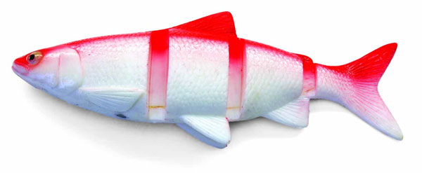 "Castaic Swimmin' Cisco 10"" (keuze uit 2 opties) - Red Shad"